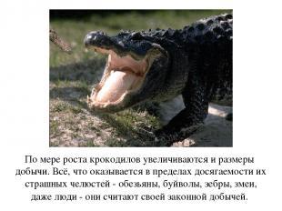 По мере роста крокодилов увеличиваются и размеры добычи. Всё, что оказывается в