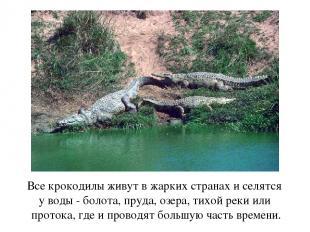 Все крокодилы живут в жарких странах и селятся у воды - болота, пруда, озера, ти