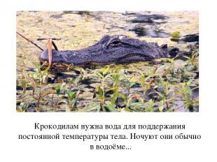 Крокодилам нужна вода для поддержания постоянной температуры тела. Ночуют они об