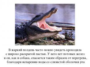 В жаркий полдень часто можно увидеть крокодила с широко раскрытой пастью. У него
