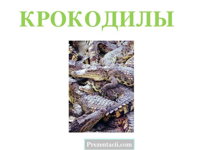 КРОКОДИЛЫ Prezentacii.com