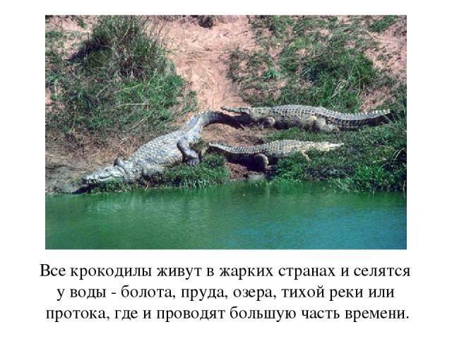 Все крокодилы живут в жарких странах и селятся у воды - болота, пруда, озера, тихой реки или протока, где и проводят большую часть времени.