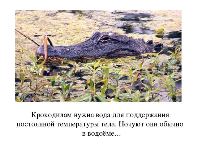 Крокодилам нужна вода для поддержания постоянной температуры тела. Ночуют они обычно в водоёме...