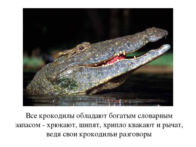 Все крокодилы обладают богатым словарным запасом - хрюкают, шипят, хрипло квакают и рычат, ведя свои крокодильи разговоры