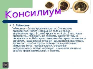 2. Лейкоциты Лейкоциты – белые кровяные клетки. Они мельче эритроцитов, имеют ни