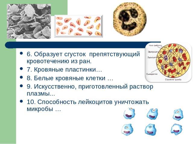6. Образует сгусток препятствующий кровотечению из ран. 7. Кровяные пластинки… 8. Белые кровяные клетки … 9. Искусственно, приготовленный раствор плазмы... 10. Способность лейкоцитов уничтожать микробы …
