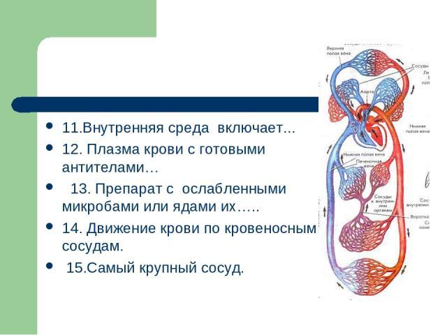 11.Внутренняя среда включает... 12. Плазма крови с готовыми антителами… 13. Препарат с ослабленными микробами или ядами их….. 14. Движение крови по кровеносным сосудам. 15.Самый крупный сосуд.