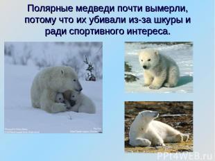Полярные медведи почти вымерли, потому что их убивали из-за шкуры и ради спортив