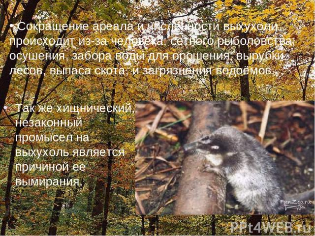 Так же хищнический, незаконный промысел на выхухоль является причиной ее вымирания. Сокращение ареала и численности выхухоли происходит из-за человека: сетного рыболовства, осушения, забора воды для орошения, вырубки лесов, выпаса скота, и загрязнен…