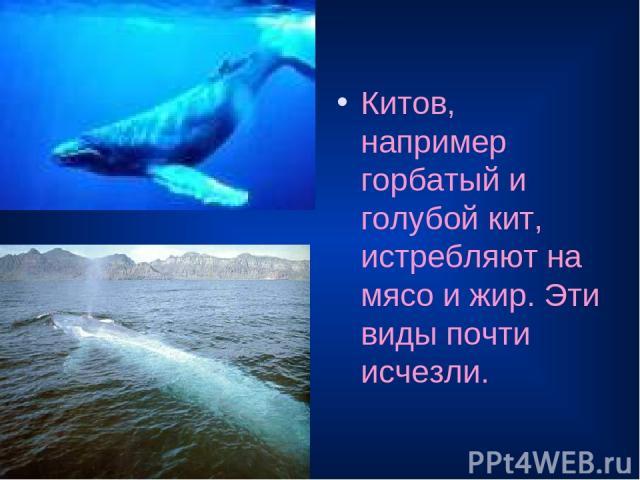 Китов, например горбатый и голубой кит, истребляют на мясо и жир. Эти виды почти исчезли.