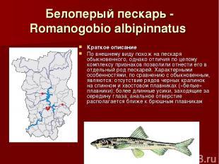 Белоперый пескарь - Romanogobio albipinnatus Краткое описание По внешнему виду п
