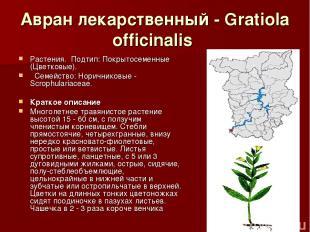 Авран лекарственный - Gratiola officinalis Растения.Подтип: Покрытосеменные (Ц