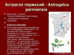 Астрагал пермский - Astragalus permiensis Растения.Подтип: Покрытосеменные (Цв