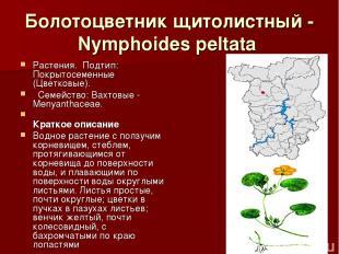 Болотоцветник щитолистный - Nymphoides peltata Растения.Подтип: Покрытосеменны