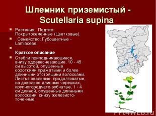 Шлемник приземистый - Scutellaria supina Растения.Подтип: Покрытосеменные (Цве