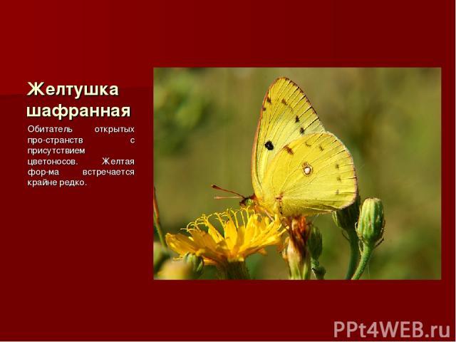 Желтушка шафранная Обитатель открытых про-странств с присутствием цветоносов. Желтая фор-ма встречается крайне редко.