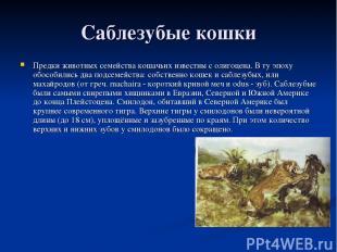 Саблезубые кошки Предки животных семейства кошачьих известны с олигоцена. В ту э