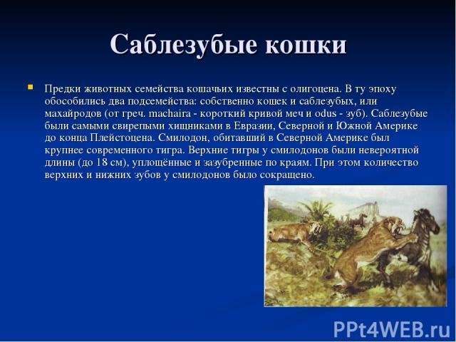 Саблезубые кошки Предки животных семейства кошачьих известны с олигоцена. В ту эпоху обособились два подсемейства: собственно кошек и саблезубых, или махайродов (от греч. machaira - короткий кривой меч и odus - зуб). Саблезубые были самыми свирепыми…
