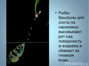 Рыбы-брызгуны для охоты на насекомых высовывают рот над поверхностью водоёма и с