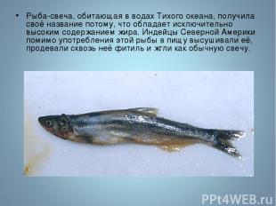 Рыба-свеча, обитающая в водах Тихого океана, получила своё название потому, что