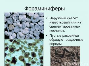 Фораминиферы Наружный скелет известковый или из сцементированных песчинок. Пусты
