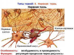 Типы тканей: 4. Нервная ткань Особенность: возбудимость и проводимость Функции: