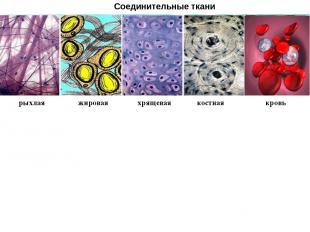 Соединительные ткани рыхлая жировая хрящевая костная кровь