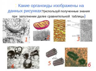: Какие органоиды изображены на данных рисунках?(используй полученные знания при
