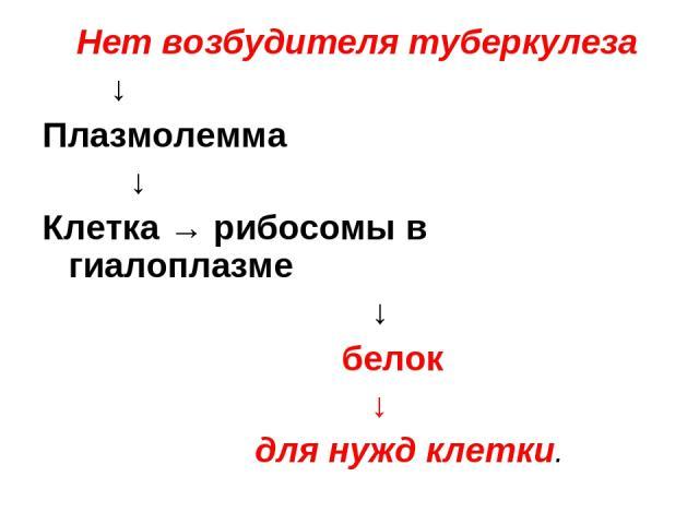 Нет возбудителя туберкулеза ↓ Плазмолемма ↓ Клетка → рибосомы в гиалоплазме ↓ белок ↓ для нужд клетки.
