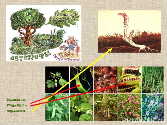 Растения хищники и паразиты
