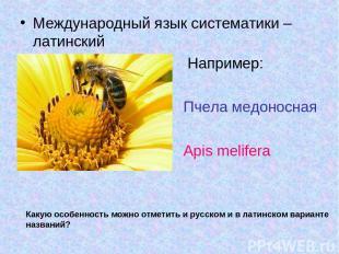 Международный язык систематики – латинский Например: Пчела медоносная Apis melif