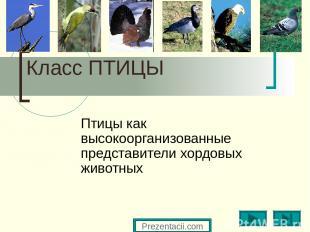 Класс ПТИЦЫ Птицы как высокоорганизованные представители хордовых животных Preze