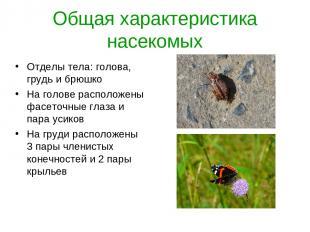 Общая характеристика насекомых Отделы тела: голова, грудь и брюшко На голове рас