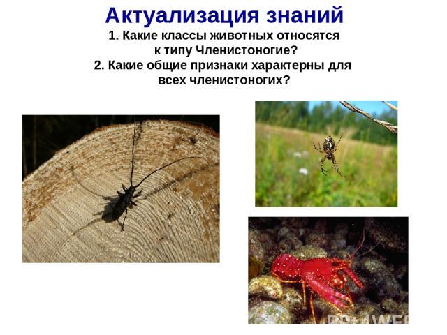 Актуализация знаний 1. Какие классы животных относятся к типу Членистоногие? 2. Какие общие признаки характерны для всех членистоногих?