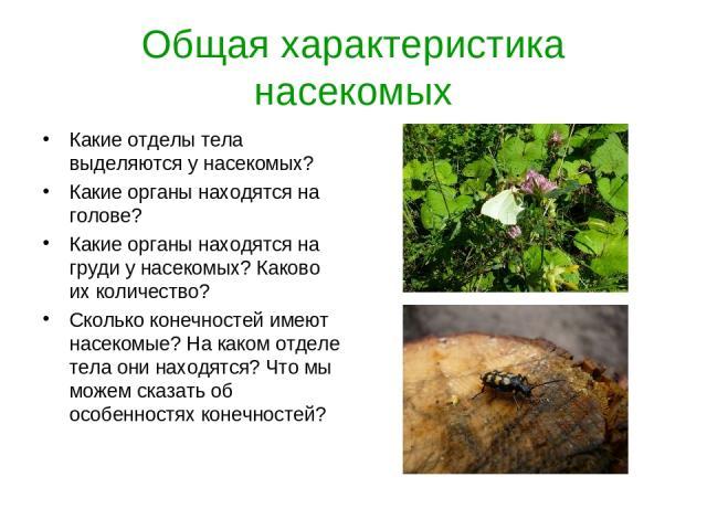 Общая характеристика насекомых Какие отделы тела выделяются у насекомых? Какие органы находятся на голове? Какие органы находятся на груди у насекомых? Каково их количество? Сколько конечностей имеют насекомые? На каком отделе тела они находятся? Чт…