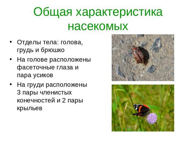 Общая характеристика насекомых Отделы тела: голова, грудь и брюшко На голове расположены фасеточные глаза и пара усиков На груди расположены 3 пары членистых конечностей и 2 пары крыльев