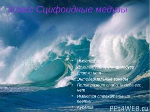 Класс Сцифоидные медузы Имеется полип Доминирует крупная медуза Глотки нет Энтод