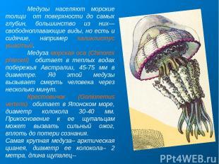 Медузы населяют морские толщи от поверхности до самых глубин, большинство из них