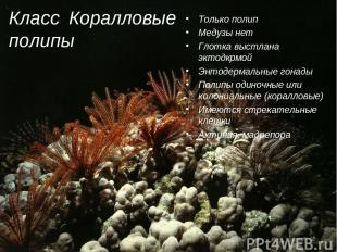 Класс Коралловые полипы Только полип Медузы нет Глотка выстлана эктодкрмой Энтод
