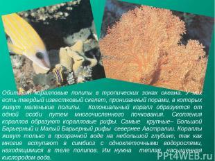 Обитают коралловые полипы в тропических зонах океана. У них есть твердый известк