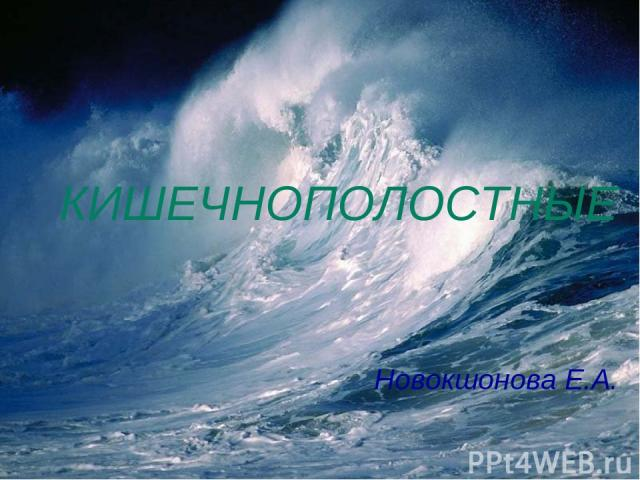 КИШЕЧНОПОЛОСТНЫЕ Новокшонова Е.А.