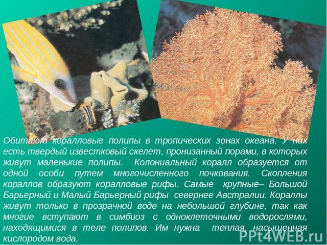 Обитают коралловые полипы в тропических зонах океана. У них есть твердый известковый скелет, пронизанный порами, в которых живут маленькие полипы. Колониальный коралл образуется от одной особи путем многочисленного почкования. Скопления кораллов обр…