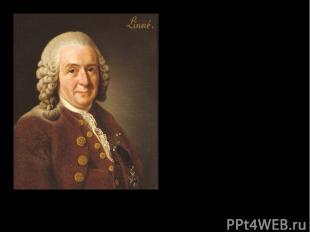 Карл Линней Карл Линней портрет работы Александра Рослина 1775 год Nomina si nes
