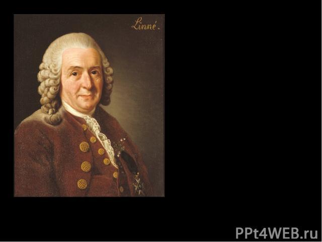 Карл Линней Карл Линней портрет работы Александра Рослина 1775 год Nomina si nescis periit et cognitio rerum Если не будешь знать имён, умрёт и познание вещей Карл Линней Prezentacii.com