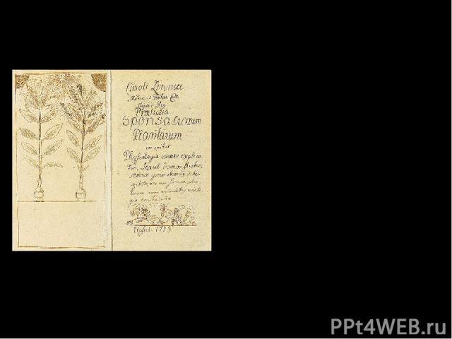 Главные научные труды: 1729 год – «Введение в половую жизнь растений» Рукопись работы «Введение в половую жизнь растений» 1732 год – «Краткая флора Лапландии»