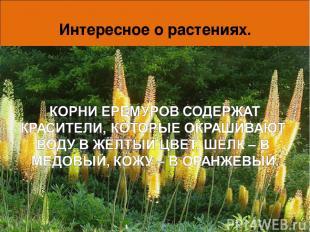 Интересное о растениях. Вот так умеют защитить себя беспомощные, на первый взгля