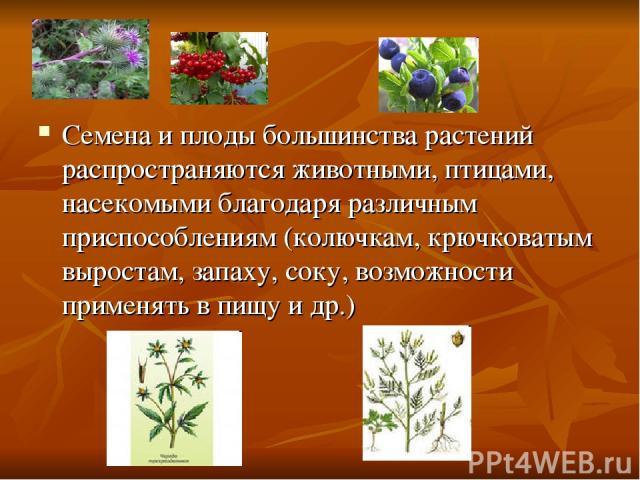 Семена и плоды большинства растений распространяются животными, птицами, насекомыми благодаря различным приспособлениям (колючкам, крючковатым выростам, запаху, соку, возможности применять в пищу и др.)