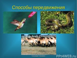 Способы передвижения учитель биологии Хуснутдинова Гульнара Гаязовна учитель био