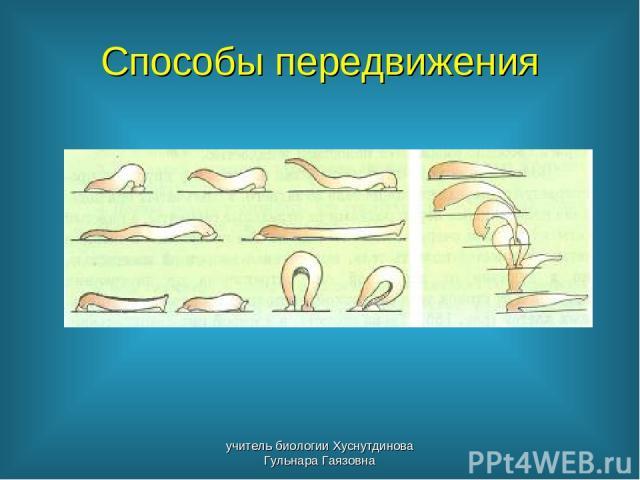 Способы передвижения учитель биологии Хуснутдинова Гульнара Гаязовна учитель биологии Хуснутдинова Гульнара Гаязовна