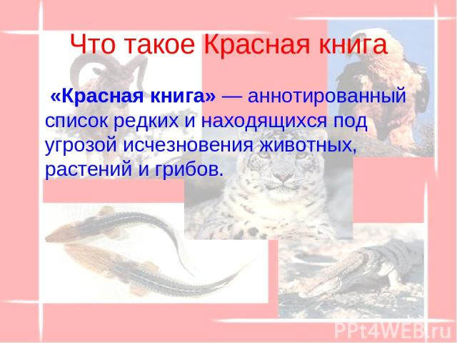 Что такое Красная книга «Красная книга» — аннотированный список редких и находящихся под угрозой исчезновения животных, растений и грибов.